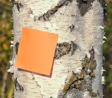Free Birch Stem Stock Photos - 16314593