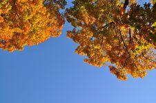 Free AUTUMN TREES Royalty Free Stock Photos - 16314858
