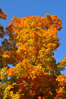 Free Colorful Tree Stock Photos - 16314903
