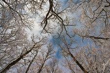 Free Winter Background Stock Photo - 16315450