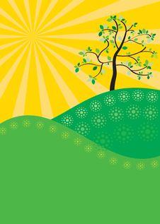 Free Green Tree Stock Photos - 16315603
