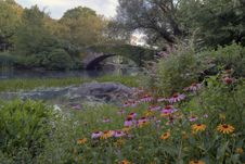 Summer In Central Park By The Pond With Flowers Royalty Free Stock Images