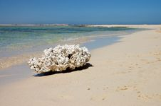 Dead Coral On The Bank Of The Red Sea Royalty Free Stock Photography