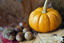 Acorns On Oak Leaf Stock Photos