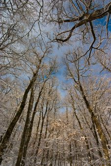 Free Winter Background Royalty Free Stock Images - 16316849