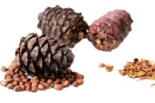 Free Pine Cone Royalty Free Stock Photography - 16316927