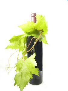 Free Wine Bottle Royalty Free Stock Photos - 16317678