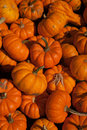 Free Mini Pumpkins Royalty Free Stock Photo - 16326295