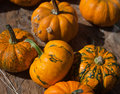 Free Pumpkins And Gourds Royalty Free Stock Photos - 16326468