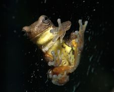 Free Frog At Window Royalty Free Stock Photos - 16320048