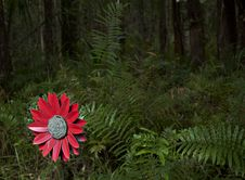 Free Fake Flower In The Woods Left Royalty Free Stock Photos - 16320278