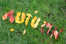 Free Fallen Red And Yellow Leafs Making Word Autumn Stock Photo - 16320800