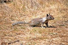 Free Cute Squirrel On The Lawn Stock Photos - 16321993