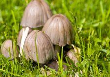 Free Mushrooms Stock Image - 16322061