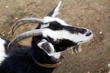 Free Goat Royalty Free Stock Image - 16323906