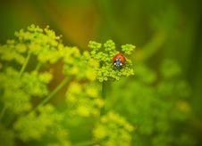 Ladybird On A Green Grass Stock Photo