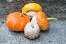 Four Decorative Pumpkins (Cucurbita Pepo) Stock Image