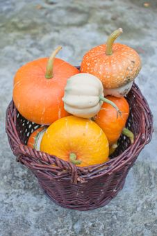 Basket Of Decorative Pumpkins (Cucurbita Pepo) Royalty Free Stock Image