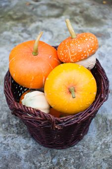 Basket Of Decorative Pumpkins (Cucurbita Pepo) Stock Images