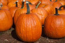 Free Pumpkins Stock Photography - 16326282