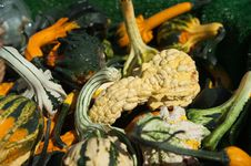 Free Gourds Royalty Free Stock Photography - 16326327