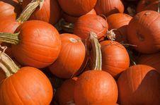 Free Pie Pumpkins Stock Image - 16326471