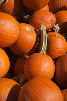 Free Pumpkins Royalty Free Stock Image - 16326476