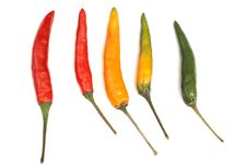 Free Multicoloured Chili Peppers Stock Photo - 16328040