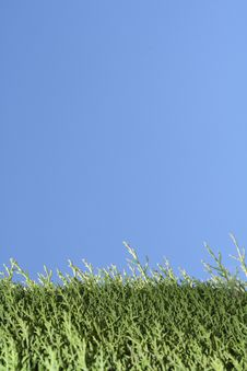 Free Green Grass And Blue Sky Royalty Free Stock Images - 16328909