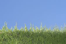 Free Green Grass And Blue Sky Royalty Free Stock Photo - 16328935