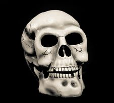 Free Skull Of The Person Stock Image - 16329111
