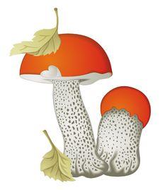 Free Mushrooms Оrange-cap Boletus Stock Images - 16329214