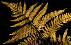 Free Autumn Fern Leaf Royalty Free Stock Photography - 16329347