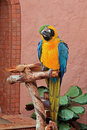 Free Blue And Gold Macaw (Ara Ararauna) Royalty Free Stock Images - 16334029