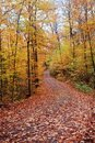 Free Fall Color Road With Full Of Leaves Covering Stock Image - 16339781
