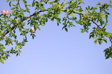 Branch Bow And A Blue Sky Royalty Free Stock Image