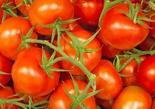 Free Tomatoes Stock Photos - 16331543