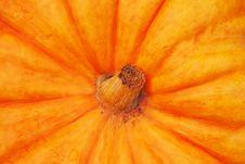Free Pumpkin Stock Photos - 16331573