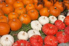 Free Colorful Pumpkins Royalty Free Stock Photography - 16331817