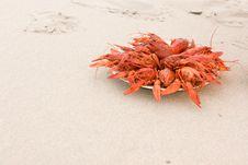 Free Crayfish On Sand Stock Photo - 16331920