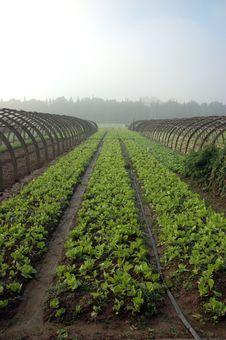 Free Farming In China Royalty Free Stock Photo - 16332635