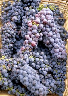 Free Red Grapes Stock Photo - 16332760