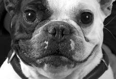 Free Dog Portrait Royalty Free Stock Images - 16333799