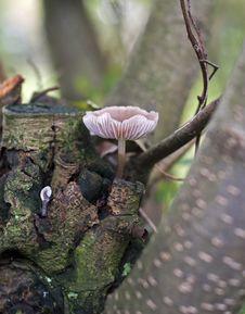 Free Fungus Stock Photos - 16334883