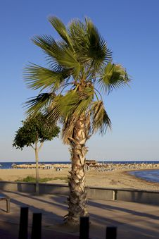 Free Beach Palm Royalty Free Stock Photography - 16337747