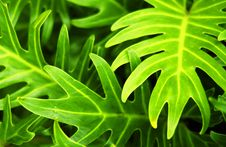 Free Tropical Plant Stock Images - 16339224