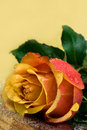 Free Yellow Rose Royalty Free Stock Image - 16342376