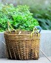 Free Chinese Work Basket Stock Images - 16344734