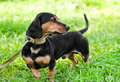Free The Dog On A Grass Royalty Free Stock Photography - 16349557