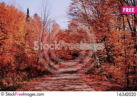 Free The Romatic Fall Color Road Stock Photo - 16342020